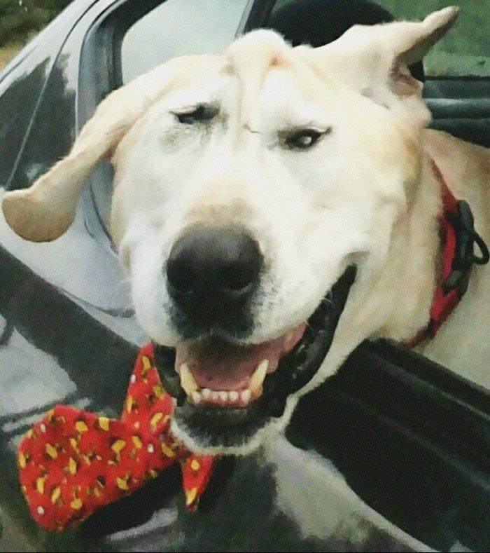 История Красавчика - собаки с нестандартной внешностью