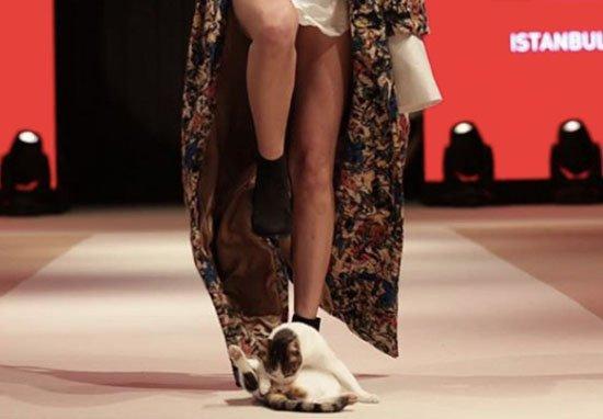 Бесцеремонная кошка едва не сорвала важный показ мод