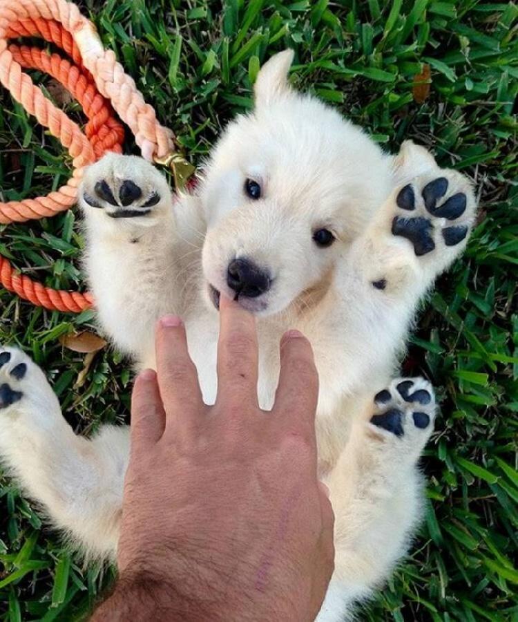 Забавные щенки, в которых невозможно не влюбиться.
