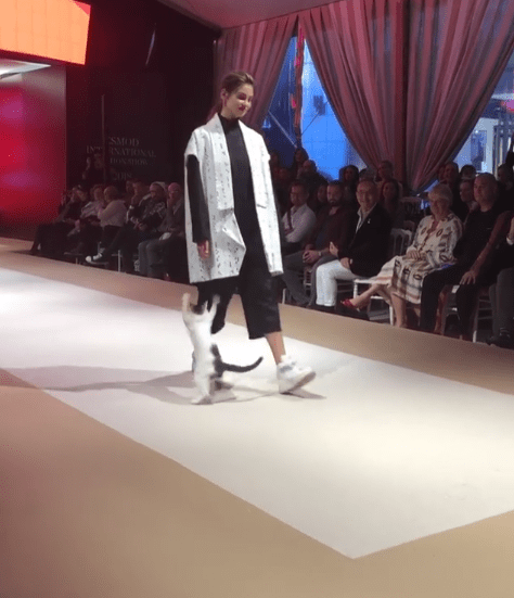 На модном показе в Стамбуле на подиум забралась кошка. И показала, что модель из неё тоже ничего