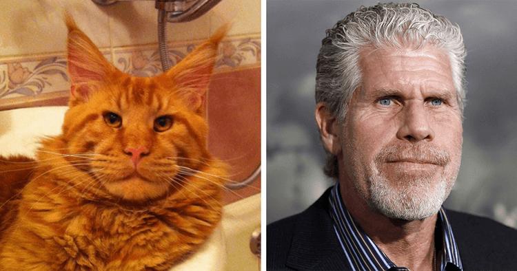 Животные — двойники знаменитостей