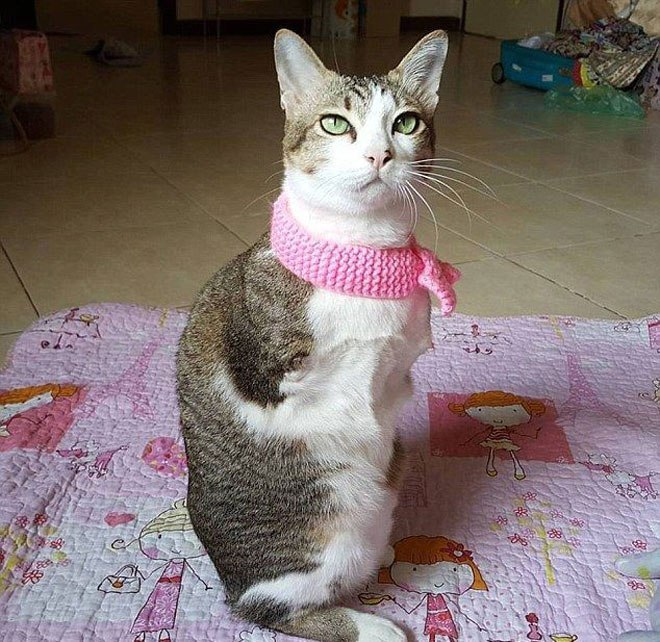 Кот без лапок научился ходить как кенгуру! У него можно поучиться оптимизму!