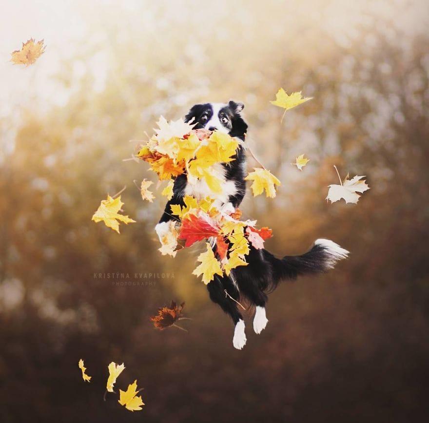 Девушка из Чехии делает потрясающие снимки собак, которые показывают их красоту и эмоциональность