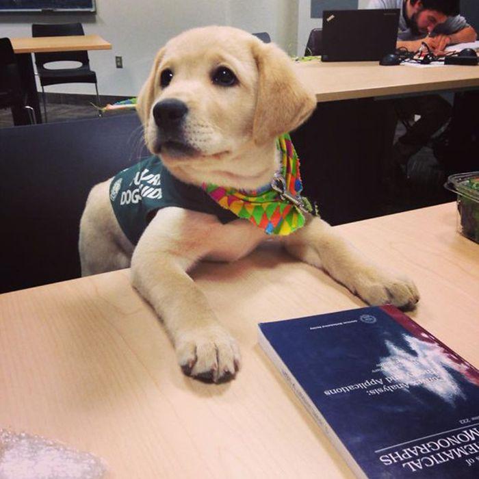 Щенки служебных собак в свой первый день на работе