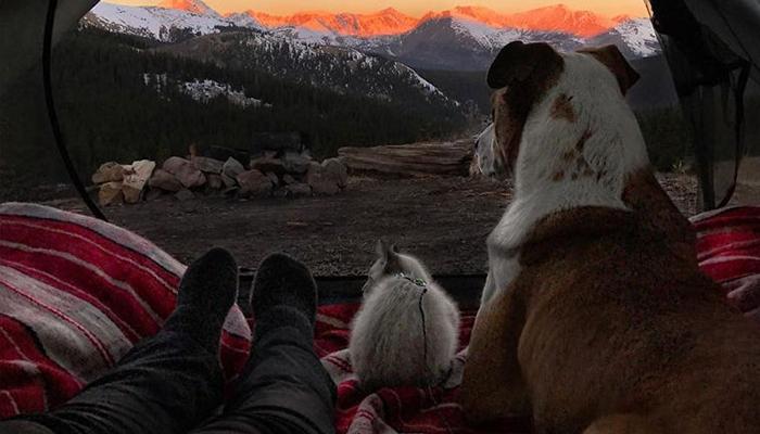 «Котопес», путешествующий по горам, очаровал соцсети