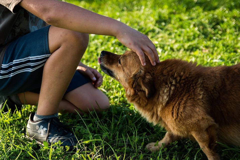 Названы самые полезные для здоровья хозяев собаки