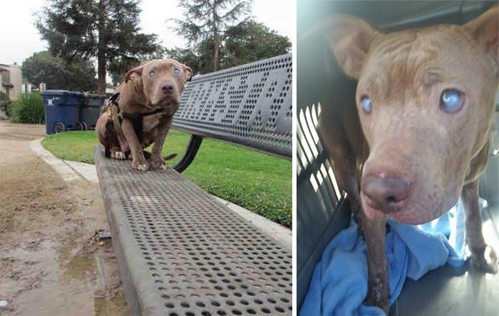 Хозяева бросили слепую собаку в парке на скамейке