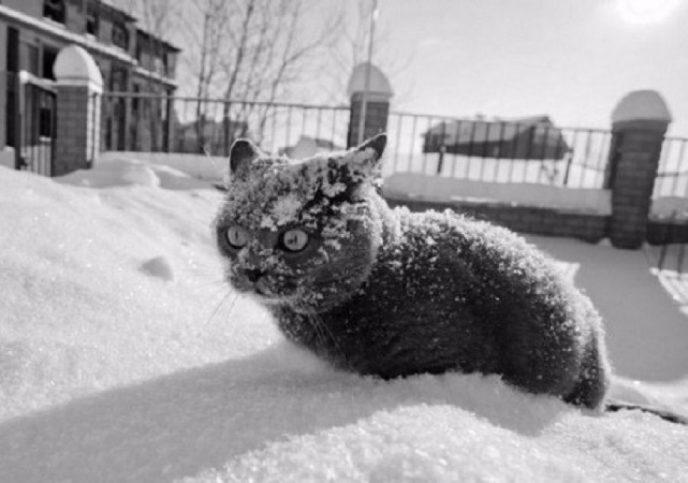 Специалисты предупреждают: наступающая зима будет самой серьезной и продолжительной за последние 100 лет!