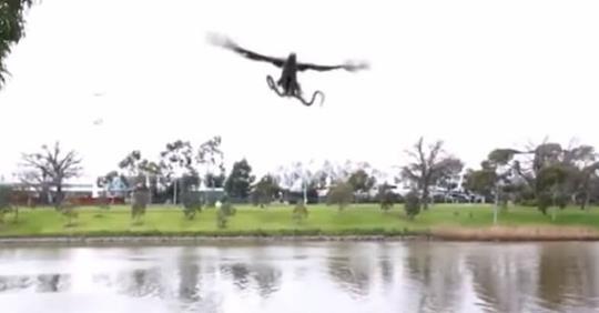 В Австралии ястреб скинул живую змею на семью отдыхающих, которые готовили в парке барбекю