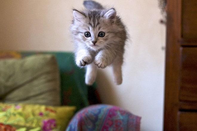 «Они еще и летают»: 10 забавных фотографий котеек, которые оторвались от земли