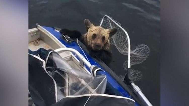 Мама медведица переплывала озеро с детьми. На полпути она устала и вернулась, а малыши начали тонуть, как вдруг