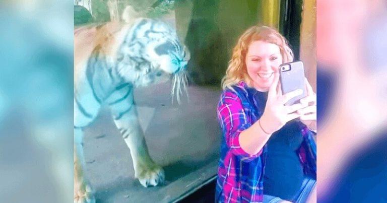 Беременная девушка хотела сделать селфи с тигром, вы только посмотрите на его реакцию!